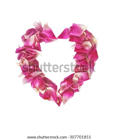 Pink petal rose flowers isolated on white with clipping path - stock photo
