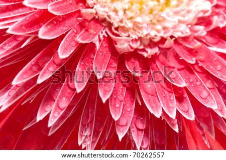 Pink petals background - stock photo