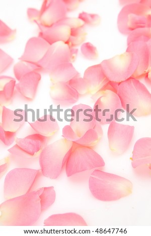 Pink petals on a white background