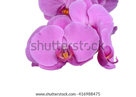 Pink Phalaenopsis white background.