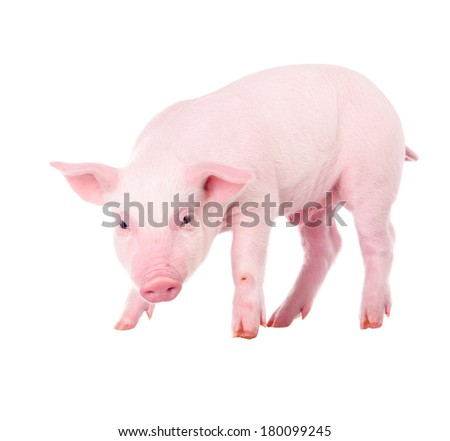 Pink pig. Isolated on white background - stock photo