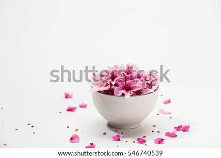 Pink plum blossom flower in a white bowl