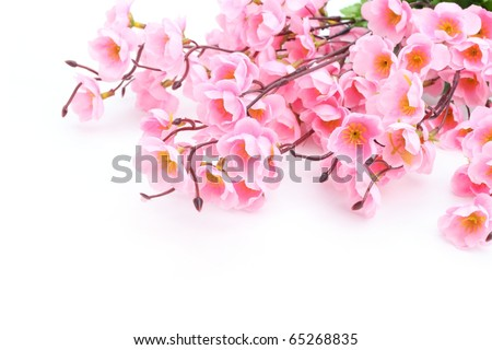 Pink plum blossom isolated on white background. - stock photo