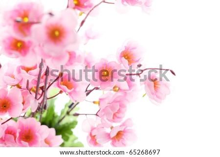 Pink plum blossom isolated on white background,Shallow Dof. - stock photo