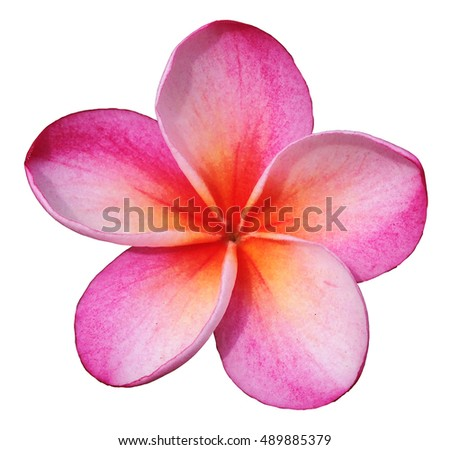 Succulent Clip Art Stock Illustration 475988368 - Shutterstock