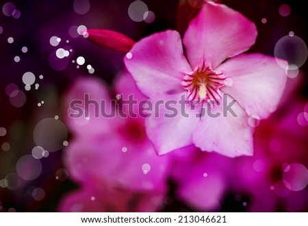 Pink plumeria flower, Flower background in pink tones, Beautiful pink flowers made with color filters, spring bloom, retro background  - stock photo