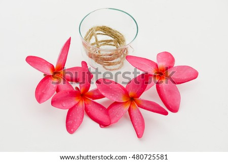 Pink plumeria flower isolated. Plumeria flower isolated on white