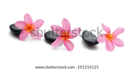 Pink plumeria isolated on white