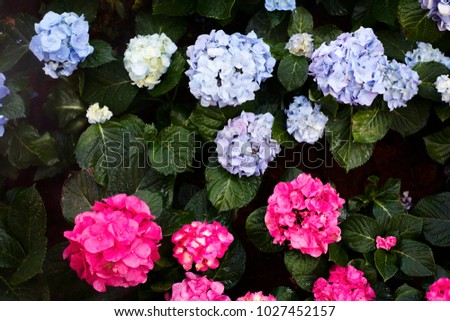 Pink purple white flowers green leaves stock photo royalty free pink purple and white flowers are green leaves take photos from the top mightylinksfo