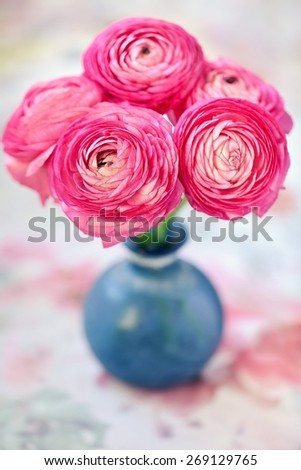 Pink ranunculus flowers close-up in a glass vase on the table. - stock photo