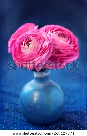 Pink ranunculus flowers close-up on a blue background. vintage style ,grunge paper background.  - stock photo