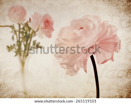 Pink Ranunculus Marble Stone Natural Background Collage - stock photo