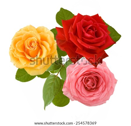 Pink, red and yellow roses bunch isolated on white background - stock photo