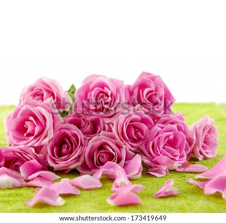 pink rose and petals on green towel  - stock photo