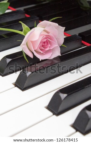 pink rose and piano - stock photo