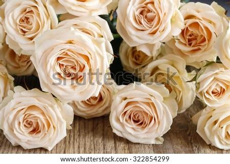 Pink rose background - stock photo