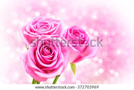 Pink rose blossoms on a bokeh background - stock photo