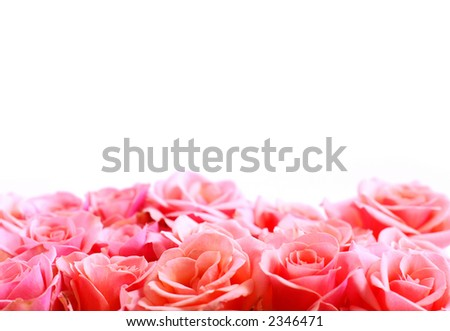 Pink rose border with white space for copy - stock photo