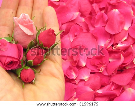 Pink rose buds in open hand on petals as background