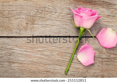 Pink rose flower and petals over wooden table with copy space - stock photo