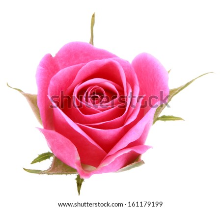 Pink rose flower head isolated on white background cutout - stock photo