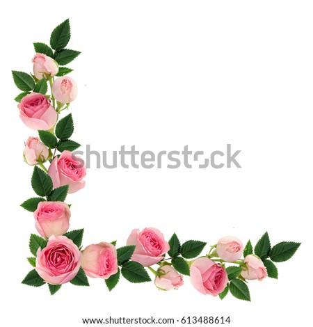 Pink Rose Flowers Buds Corner Arrangement Stock Photo