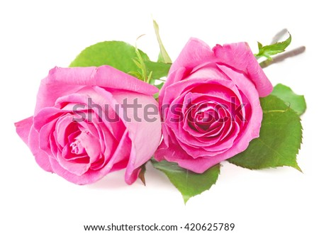Pink rose flowers bunch isolated on white background - stock photo