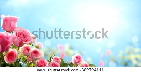Pink rose in the field against sky - stock photo