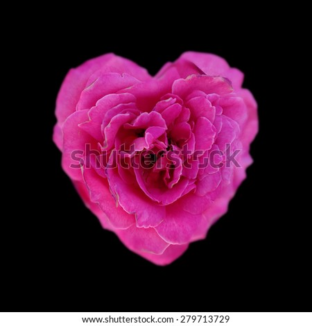 Pink rose in the shape of heart isolated on a black background - stock photo