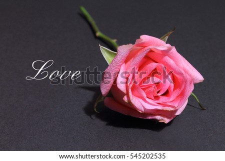 Pink Rose isolated on a black background with the words Love