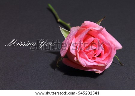 Pink Rose isolated on a black background with the words Missing You