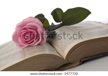 pink rose on a book close up shoot - stock photo