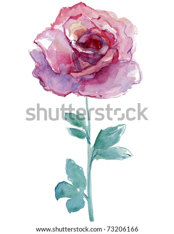 pink rose on white background. watercolor