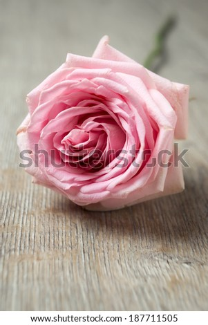 pink rose on wooden table - stock photo