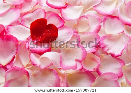 Pink rose petals and red heart.