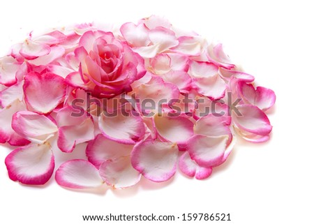 Pink rose petals and rose isolated on white background.