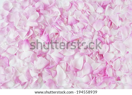 Pink rose petals background - stock photo