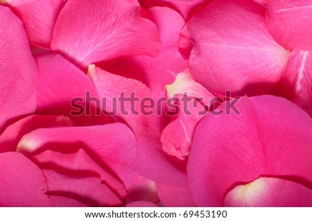 Pink rose petals close up in abstract background pattern - stock photo