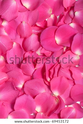 Pink rose petals in an abstract pattern as background for romance - stock photo