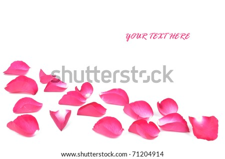 pink rose petals on white background with a copy space - stock photo