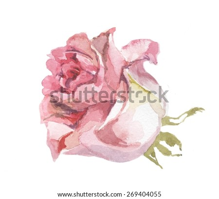 pink rose watercolor 3