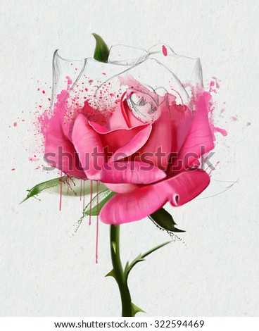 pink rose watercolor close up, with elements of the sketch and streaks of paint, watercolor illustration isolated on white background - stock photo