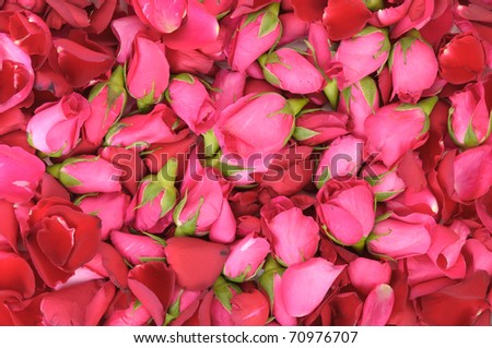 pink roses and red rose petals as a background - stock photo
