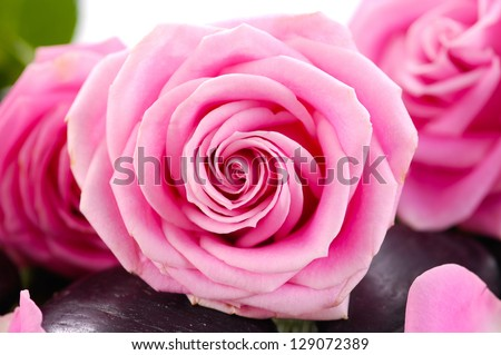 Pink roses and zen stones on white background - stock photo