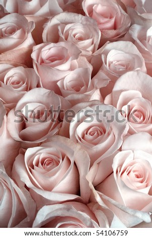 Pink roses as a background, vertical - stock photo