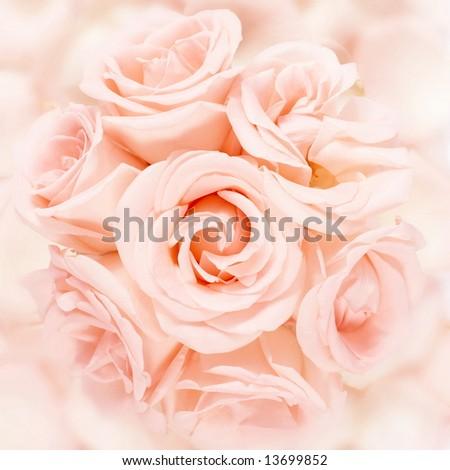 Pink roses bouquet arrangement on a pink petals - stock photo