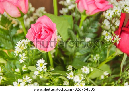 Pink roses close up. Background. - stock photo