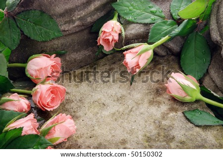 Pink roses composition on stones with waterdrops - stock photo