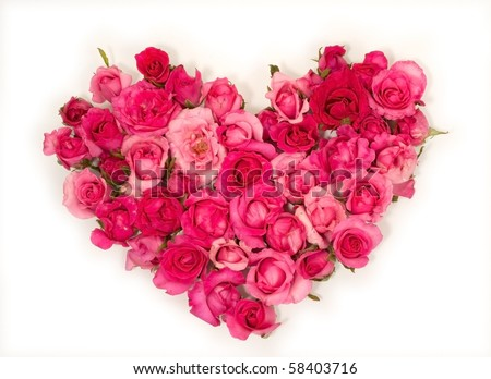 Pink roses Heart shape.on white background.Rose is a flower symbol represents love, romance in Valentines Day