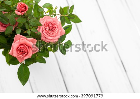 Pink roses in a flowerpot on white wooden background. Top view, copy space. Space for text, copy, lettering. Postcard template. Shallow DOF, focus is on the right flower. - stock photo